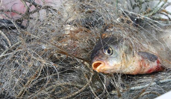 Порушник завдав збитків рибній галузі майже 6 тис. грн - Кіровоградрибоохорона