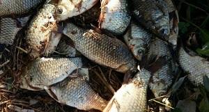 На річці Мала Вись виявлено порушення правил рибальства, - Кіровоградрибоохорона