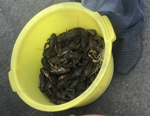 У Кропивницькому виявлено незаконний продаж раків, - Кіровоградрибоохорона